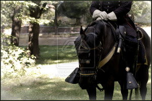 Cavalry Horse by K. Williams - A Writer's Journey