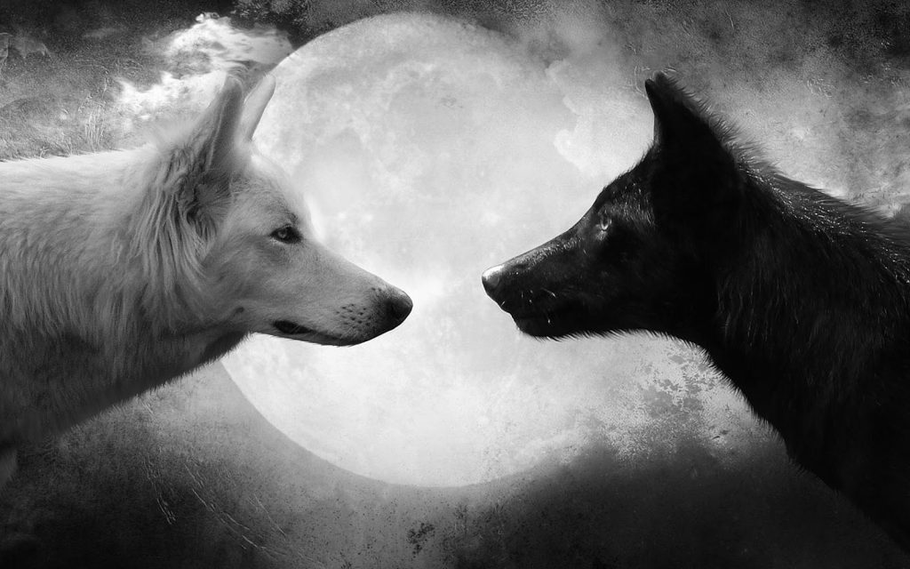 black-and-white-wallpaper-with-two-wolves-and-a-full-moon-hd-animal-background. Trailokya Trilogy. Companion Book. Wattpad