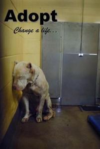 tumblr_ly85az709V1qbayw5o1_500 - My Dog Jake