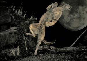 Pixabay.com, Female Pumas