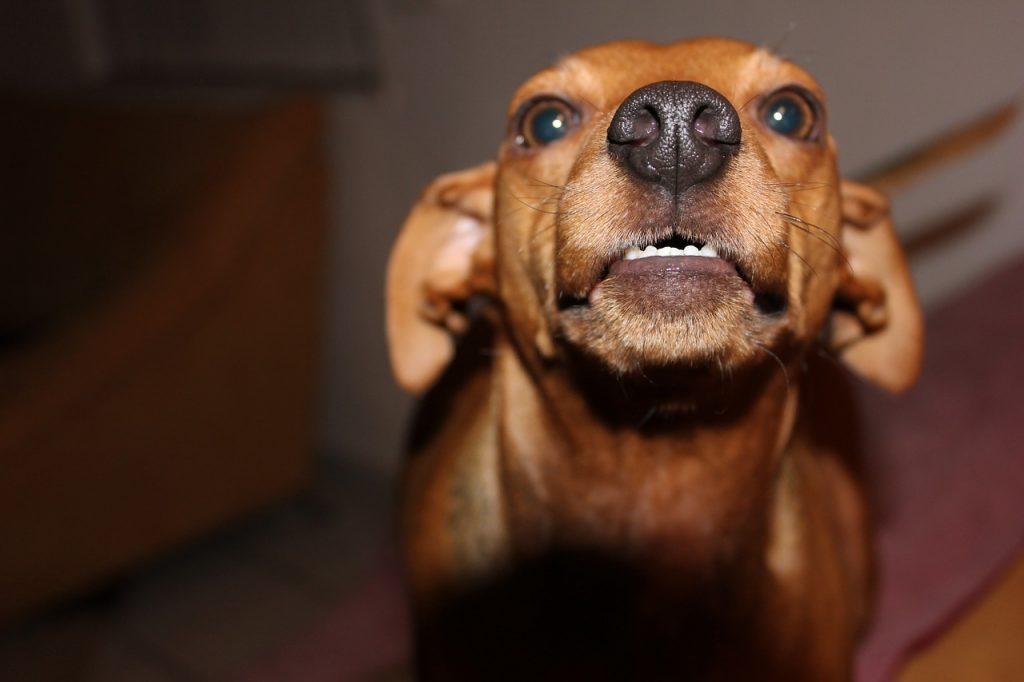 dog-588431_1280, Pixabay.com - Aggression Between Dogs