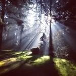 forest path, unsplash.com - Open Book Blog Hop