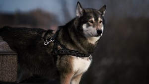 photo-1421098518790-5a14be02b243, pixabay.com - Getting A New Dog