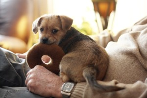 terrier-487964_1280, pixabay.com - Getting A New Dog