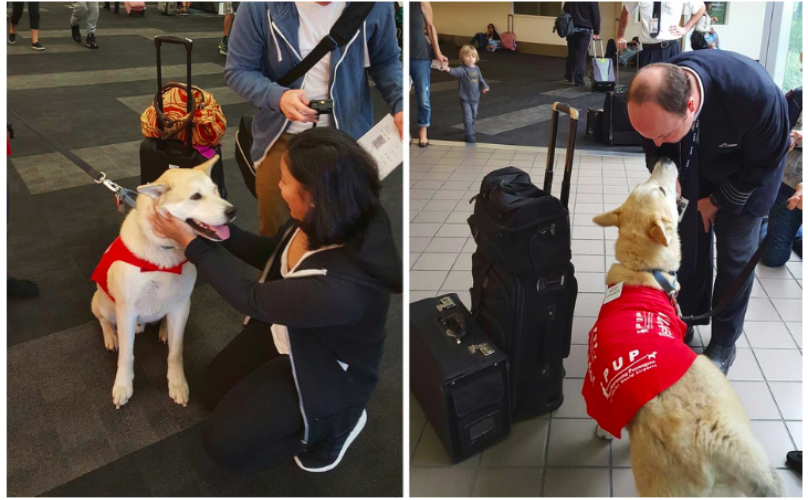 Airport Therapy Dogs