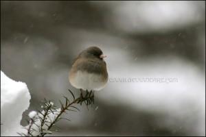 open book blog hop - winter pastimes
