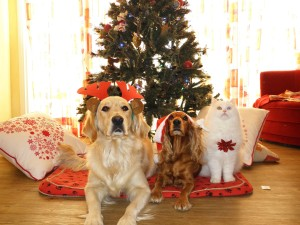 pets-962215_1920, pixabay.com, no pets for christmas