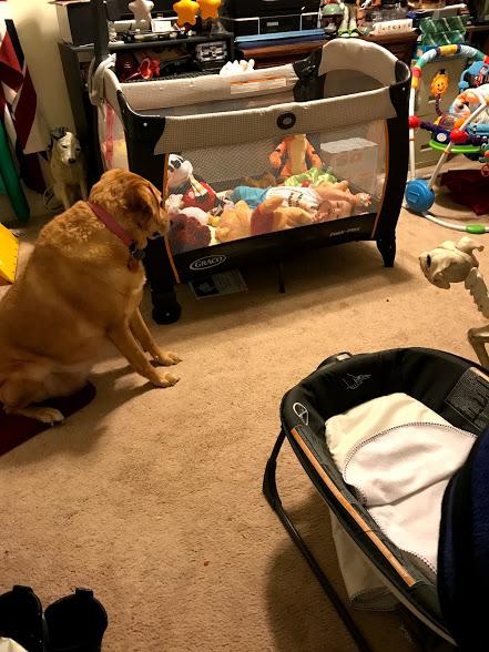 pet parenting quandaries