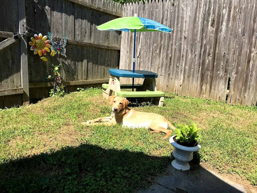 open book blog hop, backyard